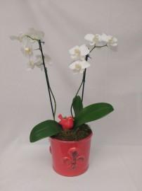 vaso de orquídea com cachepô e pássaro